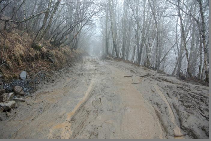Подъем к монастырю Самеба. Через час пути дорога становится непроходимой. Приходится идти поперек склона, хватаясь за ветви и стволы.